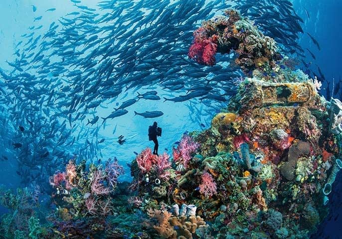 10 of the world's best underwater experiences