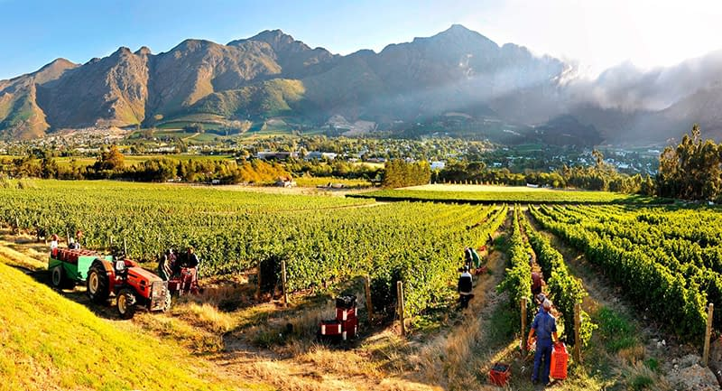 Franschhoek, Cape Town, Winelands, South Africa, Visit South Africa, vineyards, best vineyards in the new world, New World Wines, Bench Africa