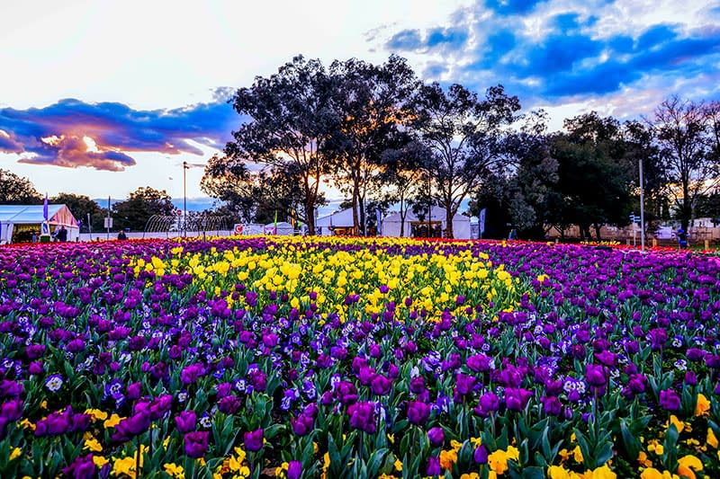 Flower festivals, Things to do in Canberra, Flowers in Canberra, floral feast, ACT, Visit Canberra