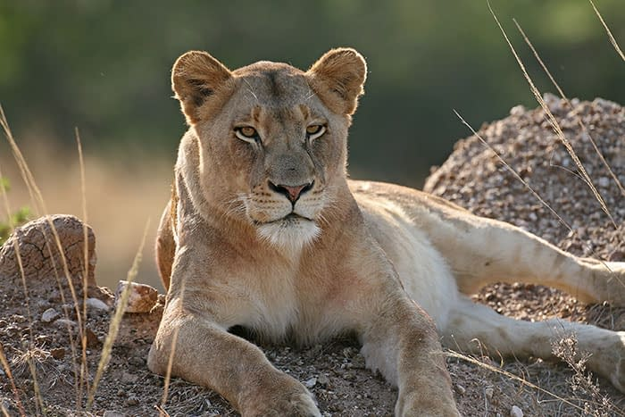 Conservation in South Africa: I'll scratch your back...